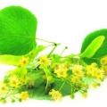 Сила липового цвіту для краси і сяйва волосся