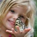 Вікторина «комахи»