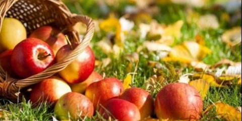 Яблуко - унікальний фрукт.