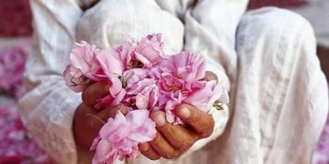 Чарівний еліксир молодості - масло троянди