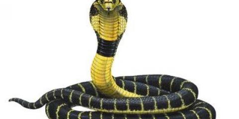 Зміїне масло для волосся відновить їх навіть після серйозних пошкоджень